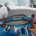fishing charters puerto vallarta