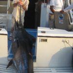 marlin fishing puerto vallarta
