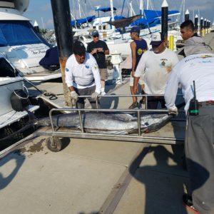 puerto vallarta fishing tournament