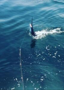 june fishing report puerto vallarta