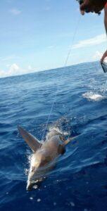 puerto vallarta fishing for shark
