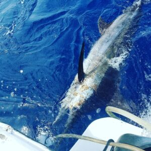 marlin fishing in puerto vallarta