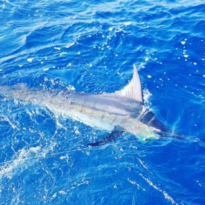 PUERTO VALLARTA FISHING REPORT MARLIN