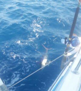 marlin in puerto vallarta fishing winter