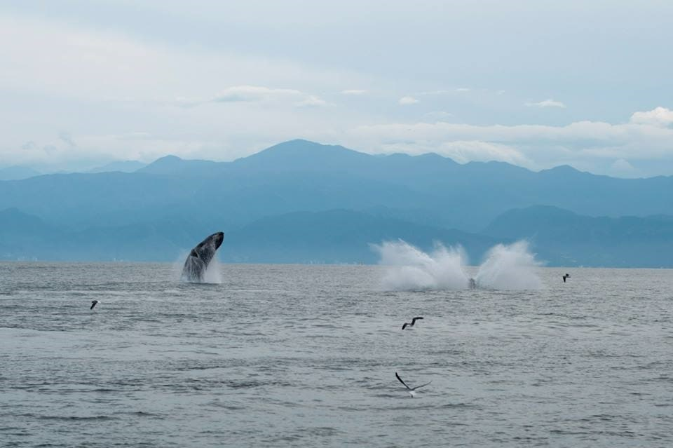 the best whale watching cruise in puerto vallarta