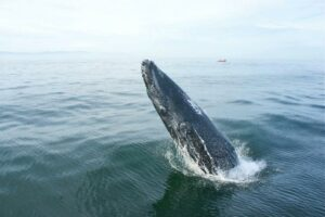 puerto vallarta whale watching in the winter