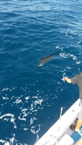 sailfish in puerto vallarta fishing trips