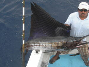 sailfish fishing in puerto vallarta