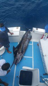 marlin fishing in April puerto vallarta